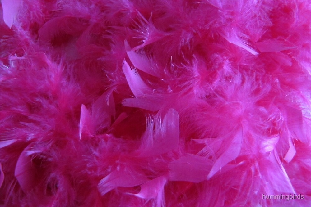 Pretty Pink Feathers by hummingbirds