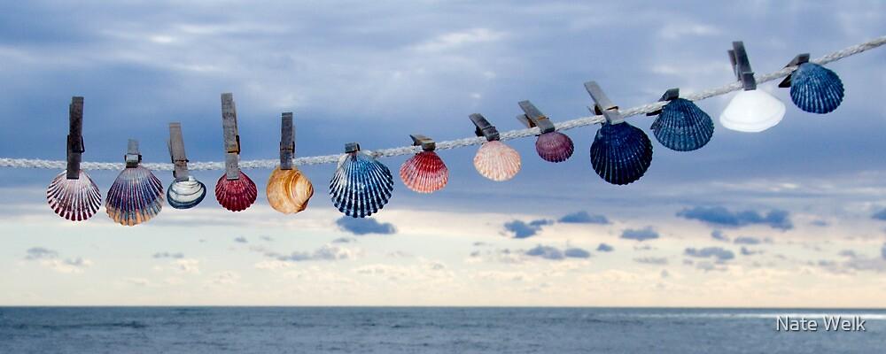 She Sells Seashells... by Nate Welk