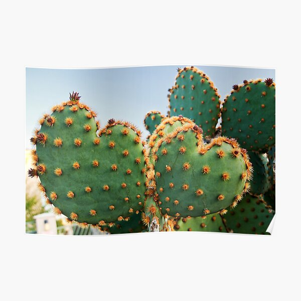 Sweetheart Cactus Poster
