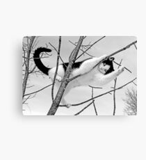 I'm Sexy & I Know It (Black & White) Canvas Print