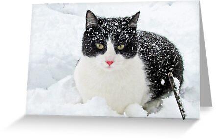 Snow Kitty by nikspix