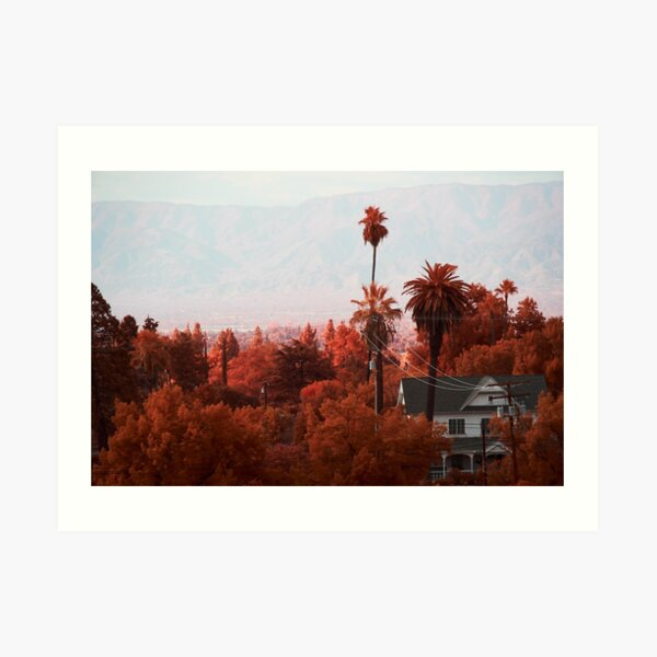 Palm Trees, and Grove in Aerochrome Art Print