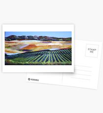 The Vineyard in a New Light Postcards