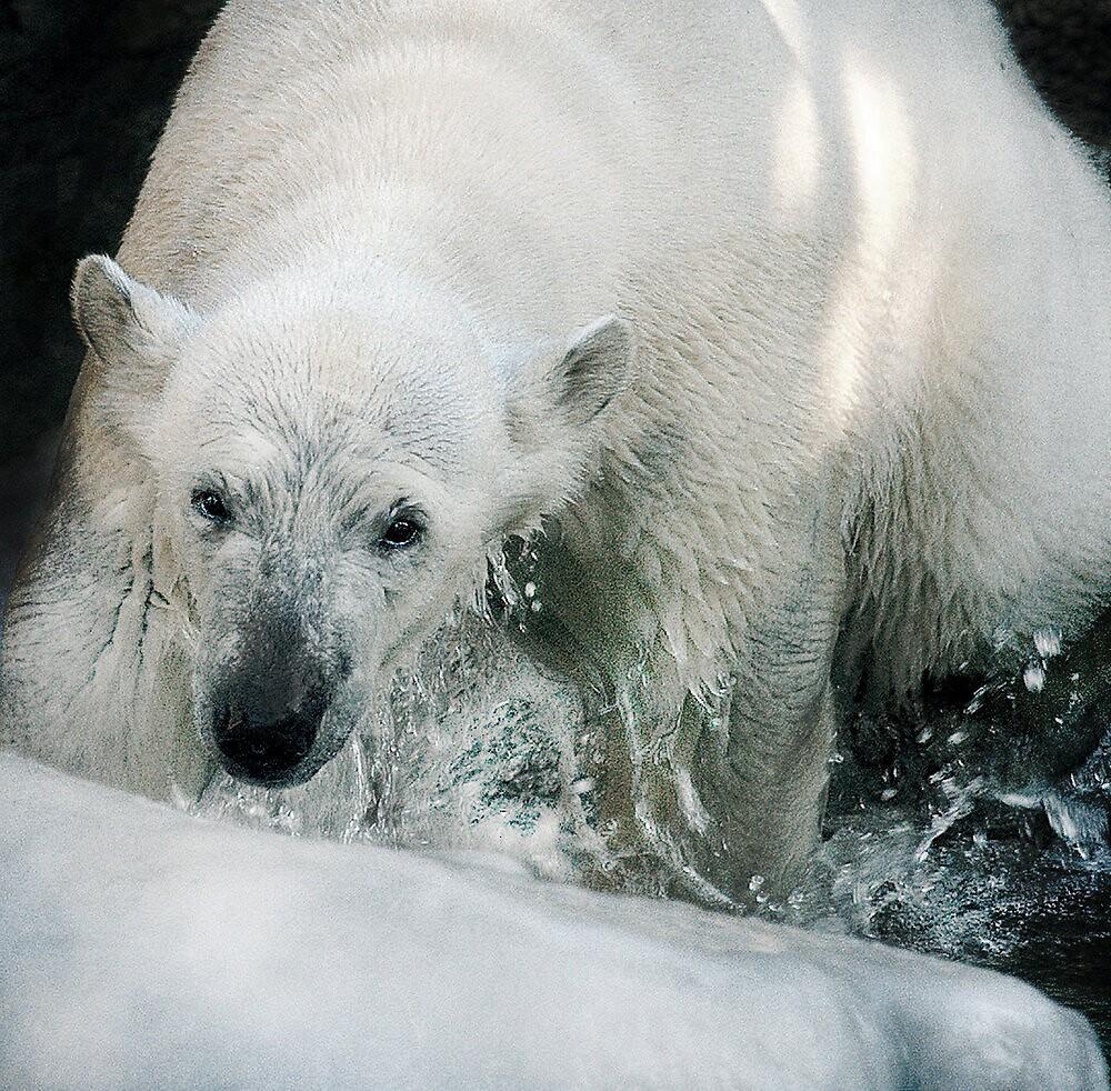 Winter wonderland by Alan Mattison