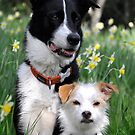 Dogs and Daffodil Gardens  by Myillusions