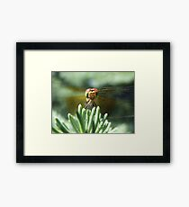 CHEESE!!! Framed Print