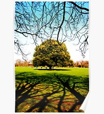 Greenwich Park - Trees & Branches Poster