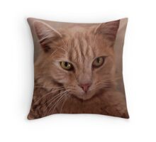 Kelly's Cat....Neville....His Name is Neville Throw Pillow