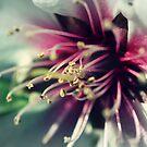 Almond bloom by ANDREA SIDENSTRICKER