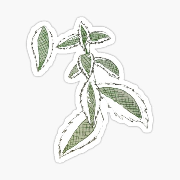 Sketchy succulent || Sticker