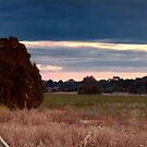 Sale Wetlands, Victoria, Australia. by Richard Cordell