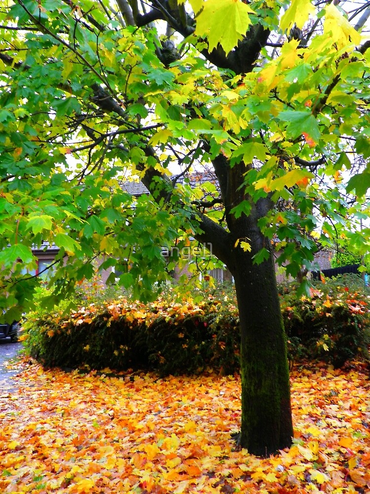 Autumn Leaves by ©The Creative  Minds