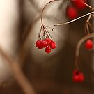Abstract Red Berries by Thomas Murphy