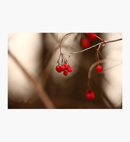 Abstract Red Berries Photographic Print