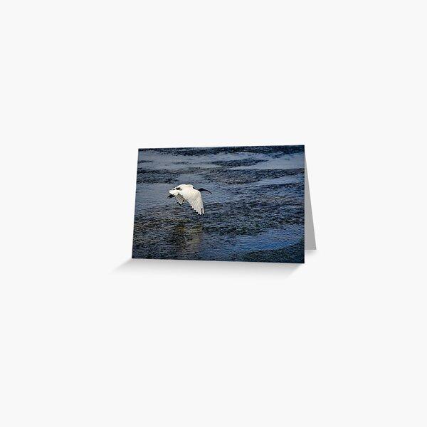 Fleeing Ibis, Flinders, Australia Greeting Card