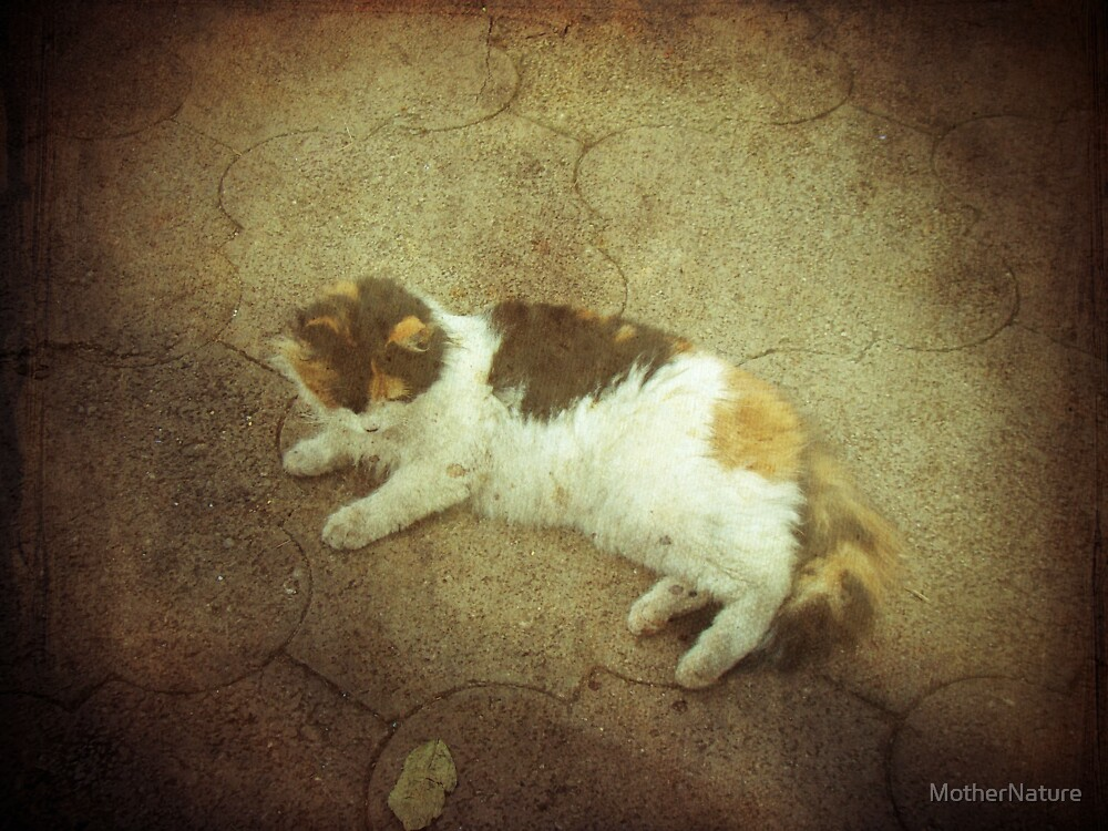 Calico Comfort by MotherNature
