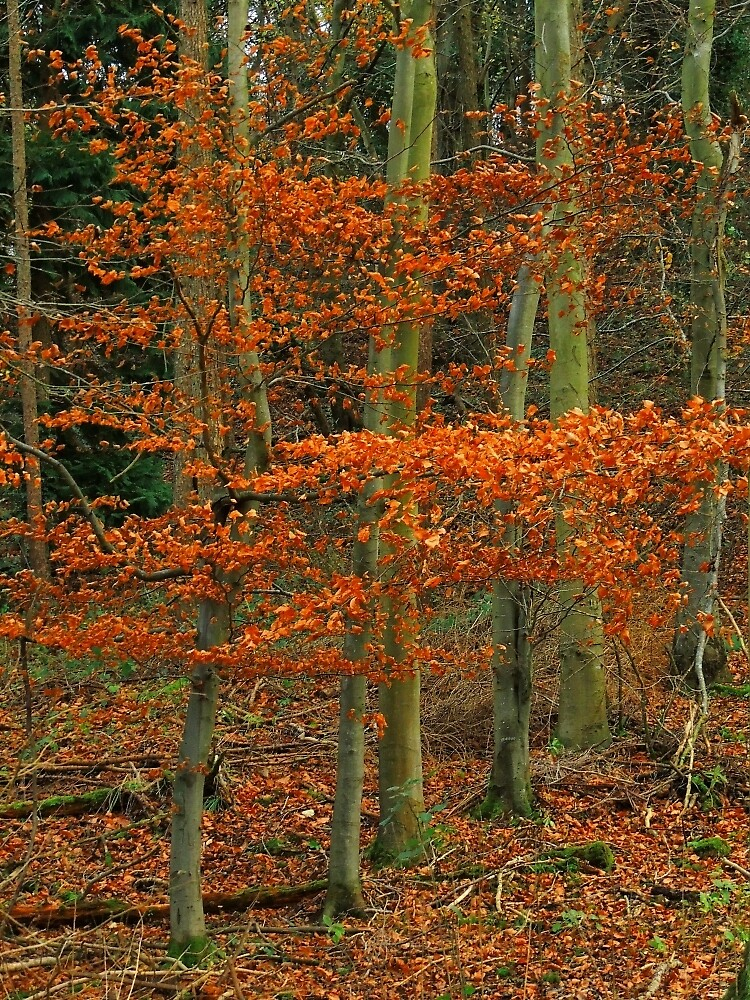 An Autumn Flame In The Woods by Alexandra Lavizzari