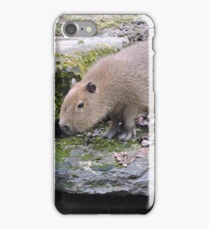 Baby Capybara iPhone Case/Skin
