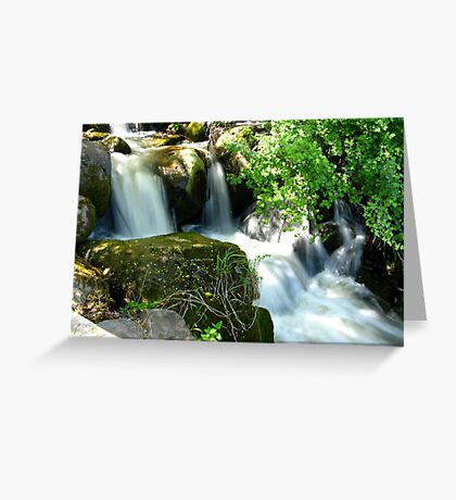 Beauty Behind the Foliage Greeting Card