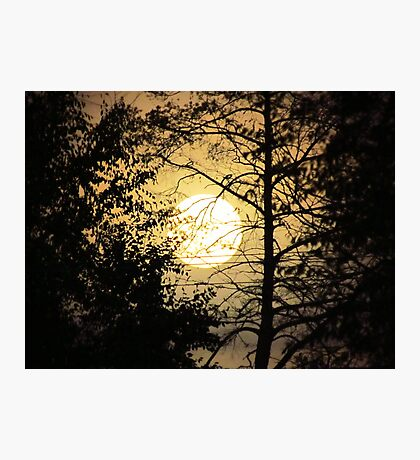 Moon Silhouette ~ Photographic Print