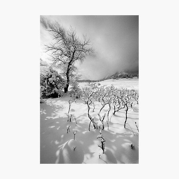 I've Got Sunshine Photographic Print