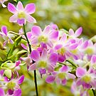 Softly Softly Orchids by Kasia-D