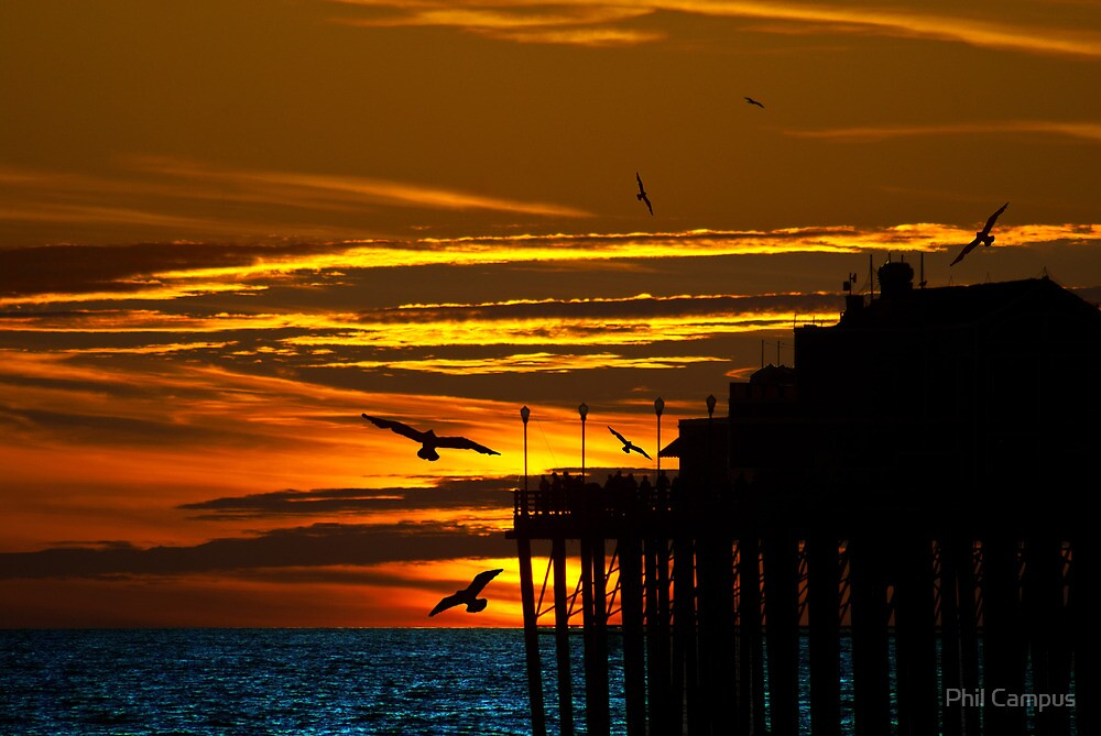 Birds at Sunset by Phil Campus