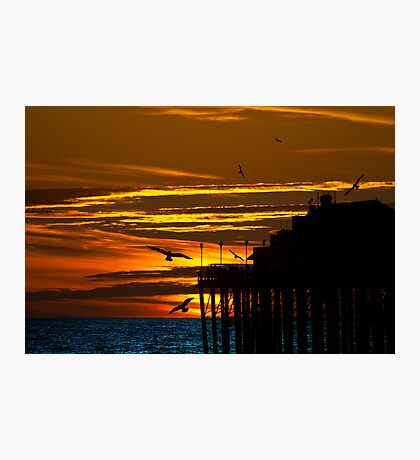 Birds at Sunset Photographic Print
