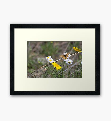 Texas Spring Color Framed Print