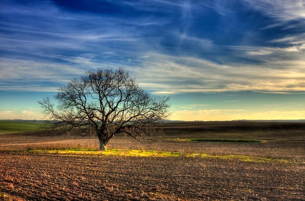 Ceres Tree by Erik Holt