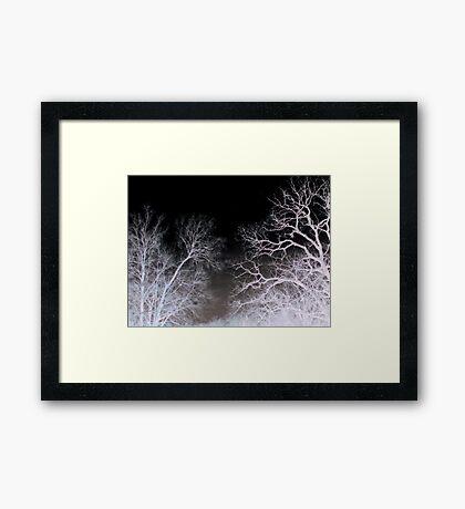 White tree Framed Print