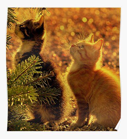 Kittens of gold Poster