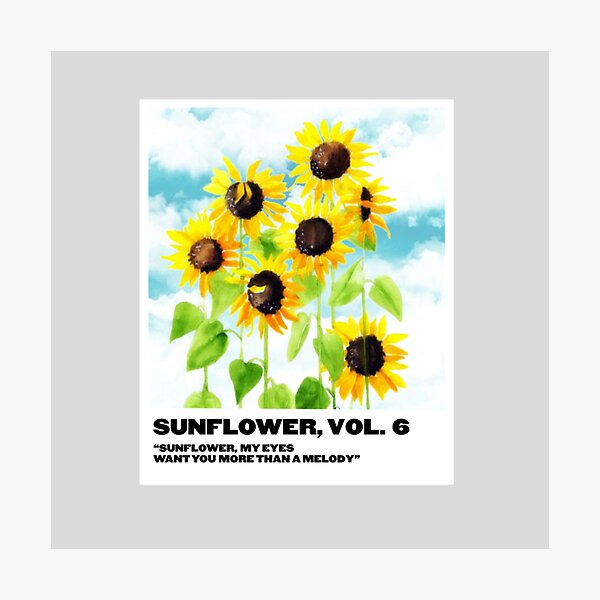sunflower, vol. 6 polaroid Photographic Print