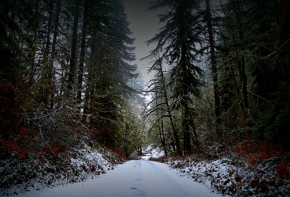 Old Santian Wagon Road by Charles & Patricia   Harkins ~ Picture Oregon