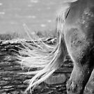 Le Conquet - Blond tail. by Jean-Luc Rollier