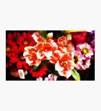 Faux flowers Photographic Print