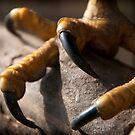 The Feet by Simon Marsden