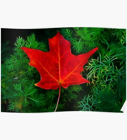 A Fallen Maple Leaf Poster