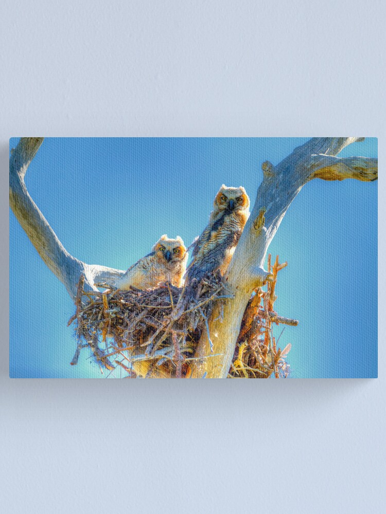 Alternate view of Great Horned Owl Chicks Canvas Print