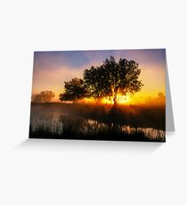 Buttercup Sunrise Greeting Card