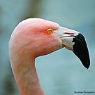 Let's Do The Flamingo by Nick Boren