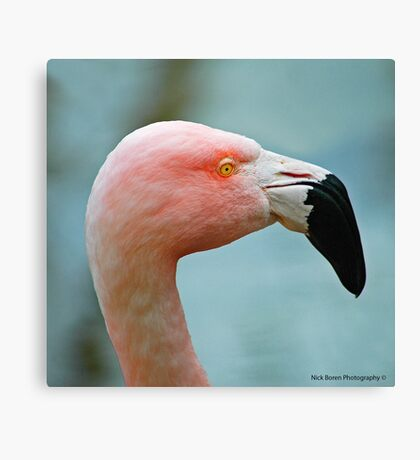 Let's Do The Flamingo Canvas Print