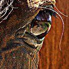 eye reflection by SylanPhotos