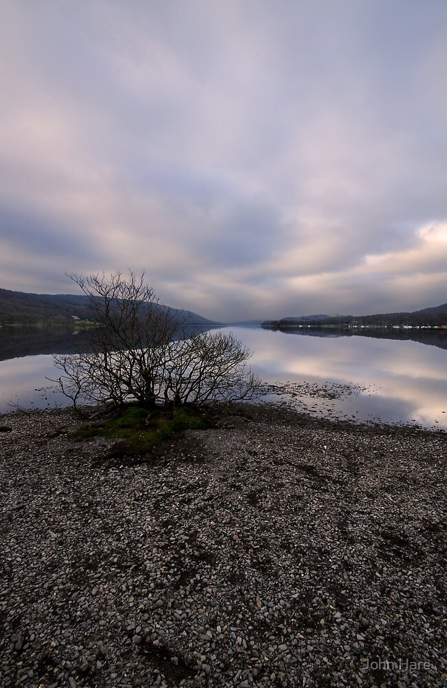 Lone Tree Coniston by John Hare
