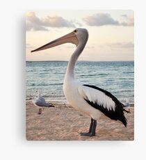Pelican, Monkey Mia Beach Canvas Print