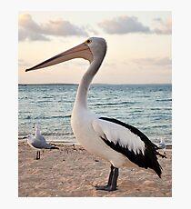 Pelican, Monkey Mia Beach Photographic Print