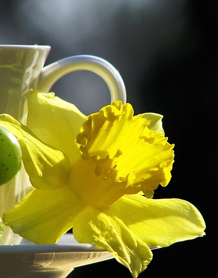 A Jonquil Morning by AngieDavies