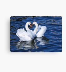 Two graceful white swans. Canvas Print