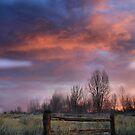 Country Morn' by Jen Millard