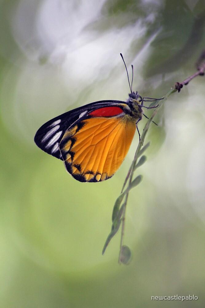 The Butterfly Effect. by newcastlepablo